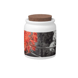 B&W splash,flower red Candy Jars