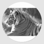 B&W Tiger Profile Photo Classic Round Sticker