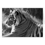 B&W Tiger Profile Photo Greeting Card