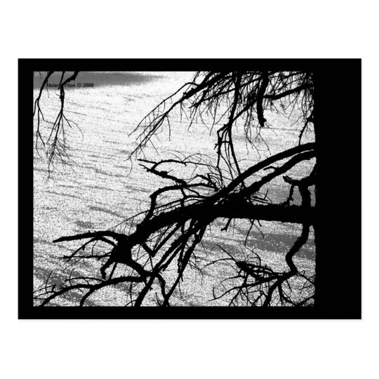 B&W Tree and Lake Postcard