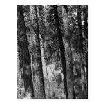 B+W trees all around postcard