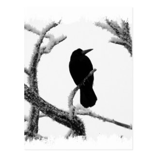 B&W Winter Raven Edgar Allan Poe Postcard