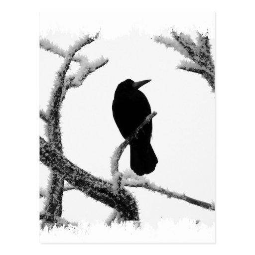 B&W Winter Raven Edgar Allan Poe Postcard