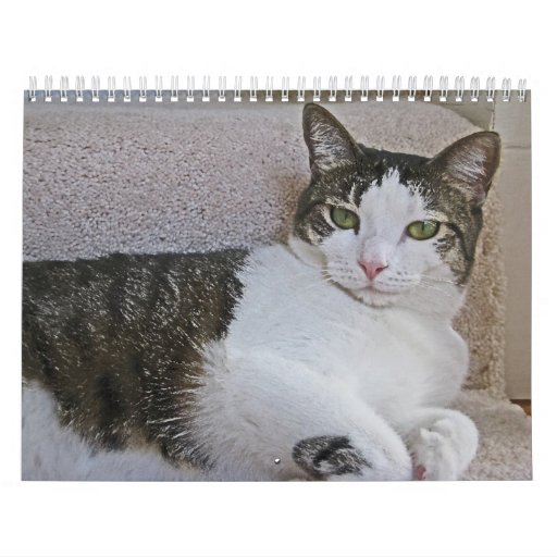 BA- Grey and White Kitty Cat 2012 Calendar