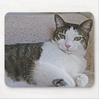 BA- Grey and White Kitty Cat on Sofa Mousepad