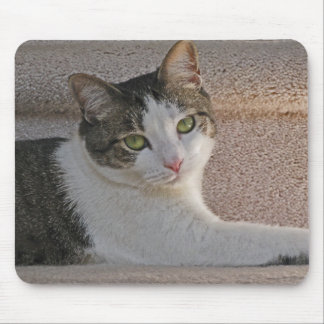 BA- Grey and White Kitty Cat Resting Mousepad