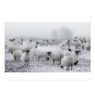 Baad Weather Postcard