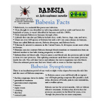 Babesia Information Fact Sheet Poster
