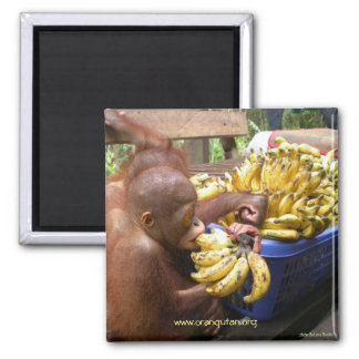 Babies & Bananas in Borneo 2 Inch Square Magnet