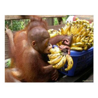 Babies Bananas in Borneo Postcards