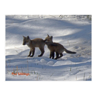 babies copy, Fox Siblings Post Card