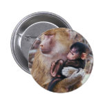 Baboon and Baby Button