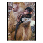 Baboon and Baby Post Card