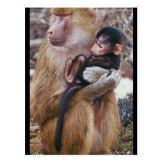 Baboon and Baby Postcard