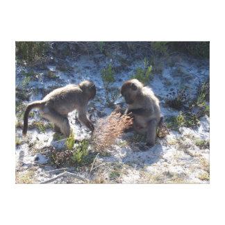 Baboon Babies playing - Close up Canvas Print
