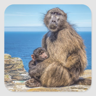 Baboon & Baby Stickers