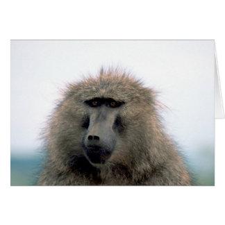 Baboon Card