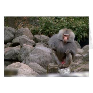 Baboon Cards