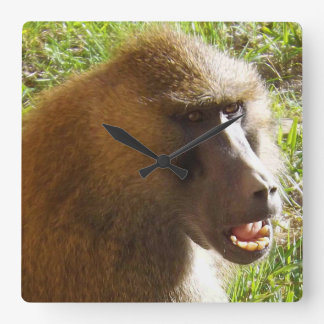 Baboon Face Showing Teeth Square Wall Clocks