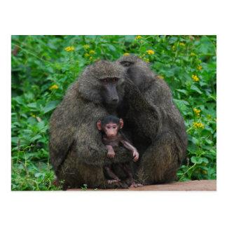Baboon Family Postcard