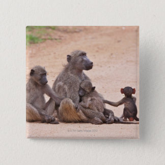 Baboon family sitting on ground button