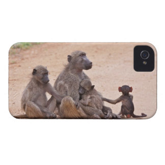 Baboon family sitting on ground iPhone 4 case