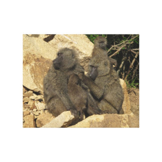 Baboon Females and Baby Canvas Print