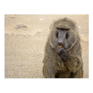 baboon in the african bush postcard