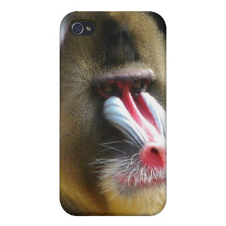 Baboon iPhone Case Cases For iPhone 4