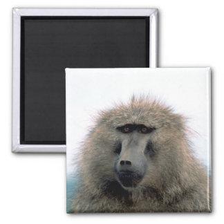 Baboon Magnet