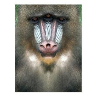Baboon Postcard