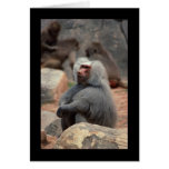 Baboon Sitting Cards