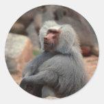 Baboon Sitting Sticker