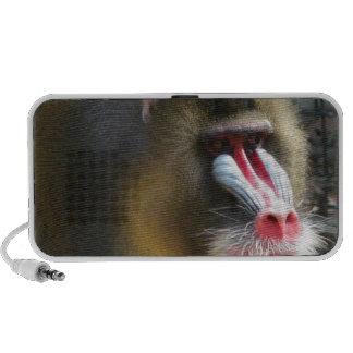 Baboon Speakers
