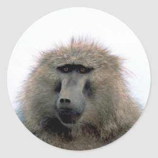 Baboon Stickers