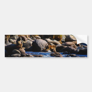 Baboons Crossing The River Bumper Sticker