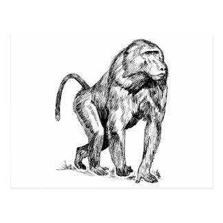 Baboons Postcard