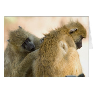 Baboons South Luwanga Greeting Card