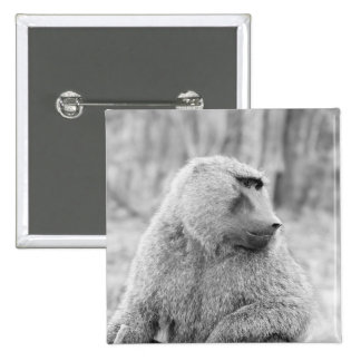 Babuino africano pin cuadrado