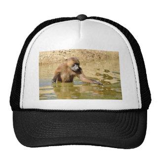 Babuino de Guinea en agua Gorras