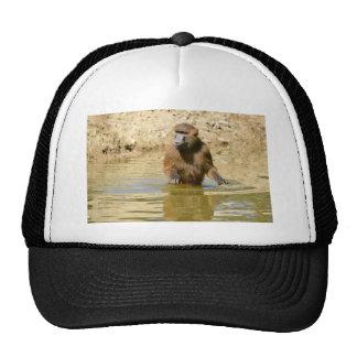 Babuino de Guinea en agua Gorros