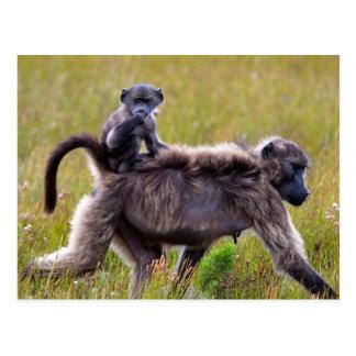 Babuinos salvajes de la madre y del bebé, tarjetas postales