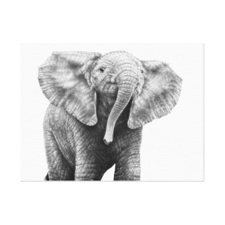 Baby African Elephant Canvas Print