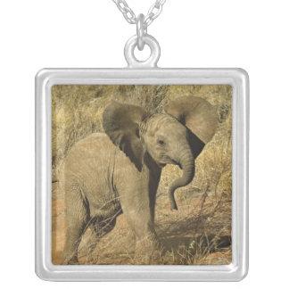 Baby African Elephant, Loxodonta Africana, Square Pendant Necklace
