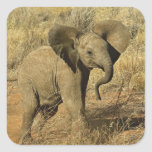 Baby African Elephant, Loxodonta Africana, Square Stickers