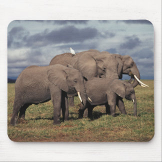 Baby African Elephant with family Mouse Pad