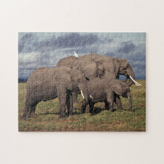 Baby African Elephant with family Puzzle