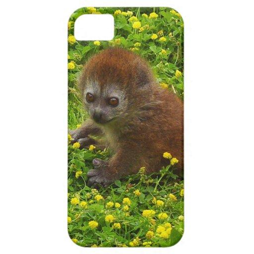 Baby Alaotran Gentle Lemur iPhone 5 Cases