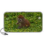 Baby Alaotran Gentle Lemur iPod Speakers