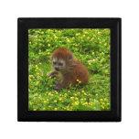 Baby Alaotran Gentle Lemur Jewelry Box